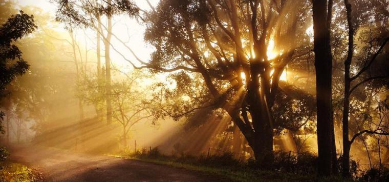 ssphoto-morning-mist-landscape