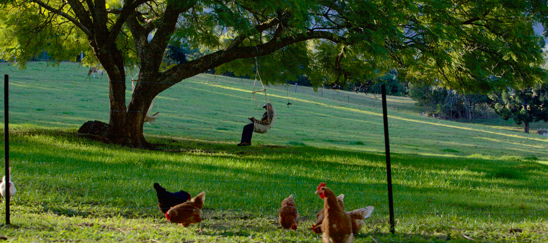 bellingen farmstay activities, nsw holidays, rustic cabin holiday accommodation